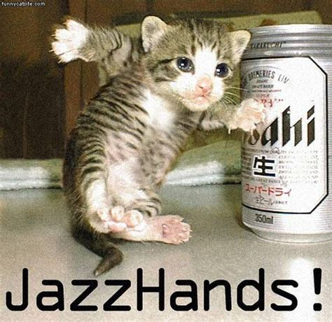 funny image collection  funny cat pictures funny