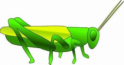 Grass Clker Clip Hopper Clipart Vector