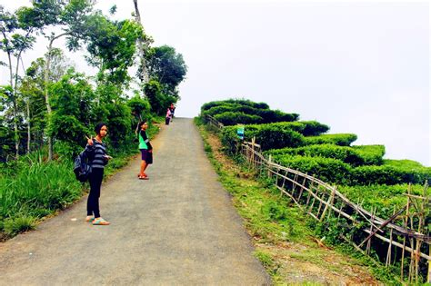 keindahan desa wisata kebun teh nglinggo kulon progo