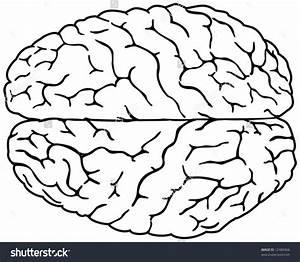 32 Blank Brain Diagram To Label
