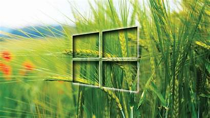Windows Wallpapers Wheat Field Computer Wallpapersafari Transparent