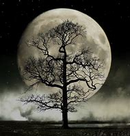 Best Tree Moon Ideas And Images On Bing Find What Youll Love