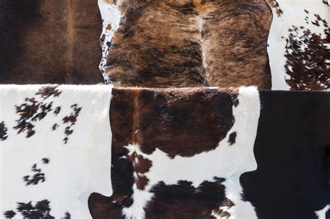 How To Care For Cowhide Rug by Cowhide Rug Tips