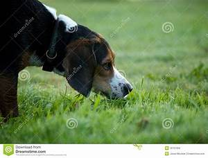 royalty free stock images dog sniffing image