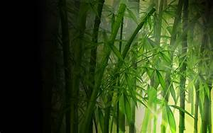 bamboo wallpaper download