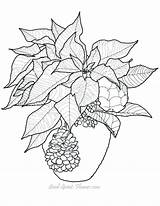 Coloring Poinsettia Printable Gourd Adult Adults Drawing Flowers Flower Patterns Sheets Bing Difficult Clipart Ornament Colors Template Guide Pattern Embroidery sketch template