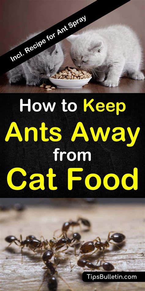 how to keep ants away from cat food