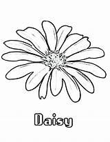 Daisy Coloring Flower Flowers Pages Drawing Daisies Colouring Printable Draw Simple Colornimbus Getdrawings Pattern sketch template