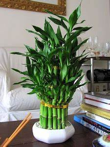 Plante De Salon : une plante pour chaque pi ce ~ Teatrodelosmanantiales.com Idées de Décoration