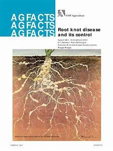 Root Knot Disease