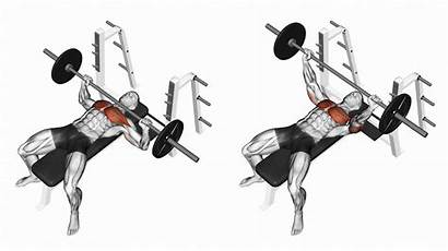 Press Bench Fitness Muscles Arm Muscle 1440