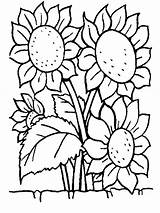 Coloring Flowers Pages Coloringpages1001 sketch template