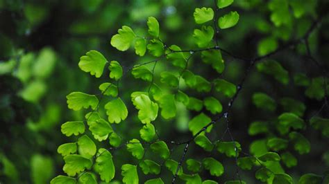 High Definition Green Leaves Wallpapers  Hd Wallpapers