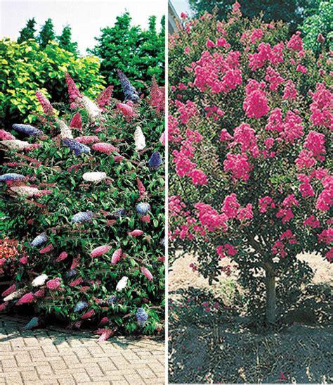 Straeucher Fuer Den Garten by Bl 252 Ten Str 228 Ucher Kollektion Bl 252 Hende Str 228 Ucher Bei