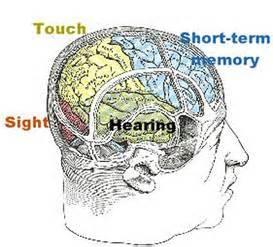 KEY CONTENT: Sensory Memory | Followingorders's Blog