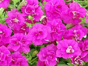 Bright, Beautiful Flowers for a Colorful Garden HGTV