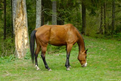 horse grazing horses centauress deviantart colics should pasture freebigpictures groups doctorramey