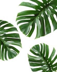 bathroom wall mirror ideas best 25 tropical leaves ideas on tropical