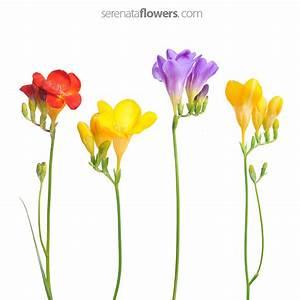 Flowers pressing - make your flowers last longer