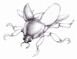 Scarab Beetle Drawing 21781 | NOTEFOLIO