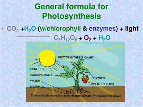chapters   photosynthesis respiration