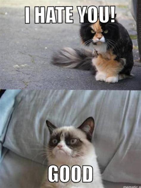 Good Meme Grumpy Cat - random acts of hydra 21 pics kill the hydra
