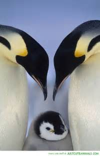 Cute Baby Penguins Family