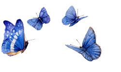 animated butterfly image collection   animations