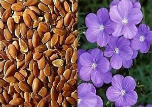 Льняное семя как средство похудения
