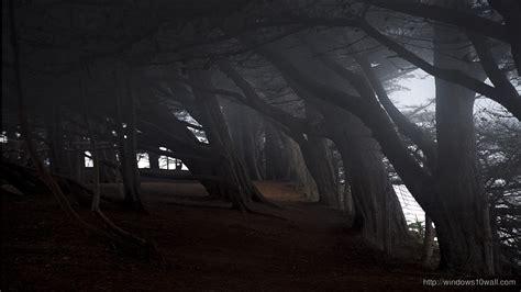 dark forest trees hd wallpaper windows  wallpapers
