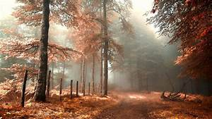 Download Wallpaper 1920x1080 Forest, road, fence, fog, red ...