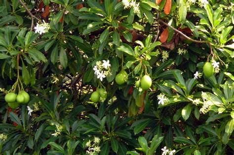 poisonous plants planet warrior 8 poisonous plants in india that can kill