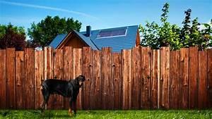 Günstiger Zaun Für Hund : mv versucht nachbarschaftsstreitigkeiten friedlich zu l sen hecke zaun oder bellender hund ~ Frokenaadalensverden.com Haus und Dekorationen