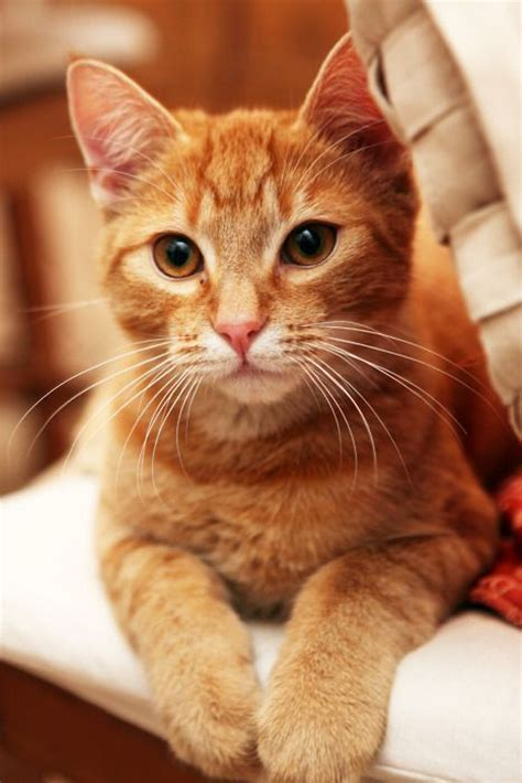 cute ginger cat pictures   fun