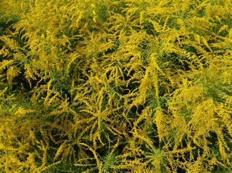 Lotusblume Botanischer Garten Wien by Botanische Spaziergaenge At Thema Anzeigen 34 Woche 2014