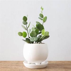 les 25 meilleures idees de la categorie succulentes rares With tapis chambre bébé avec graines fleurs rares