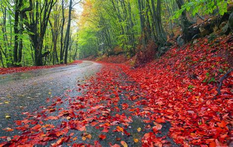 Rainy Autumn Forest Full Hd Nature Wallpaper