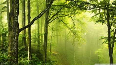 Green Forest Image by Green Forest Wallpaper 71 Images