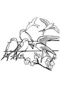 coloriage hirondelles chantant le printemps