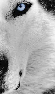 [49+] Amazing Animal Wallpapers on WallpaperSafari
