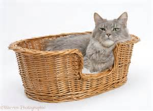 cat basket maine coon cat in a basket photo wp18864