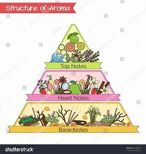 Aromatic Structure Notes Guide Perfume Scent Stock Vector