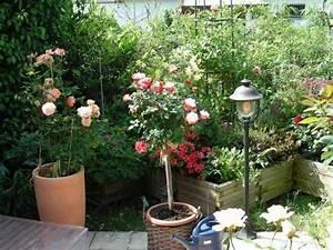 Gräser Kübel Terrasse : welche rosen eignen sich zur k belhaltung auf der terrasse und wie gro die k bel dann mein ~ Markanthonyermac.com Haus und Dekorationen