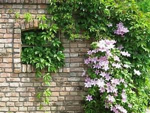 Plantes Grimpantes Mur : vieux mur serti de plantes grimpantes et de fleurs ~ Melissatoandfro.com Idées de Décoration
