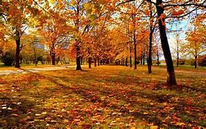 autumn sunset wallpaper - HD Desktop Wallpapers | 4k HD