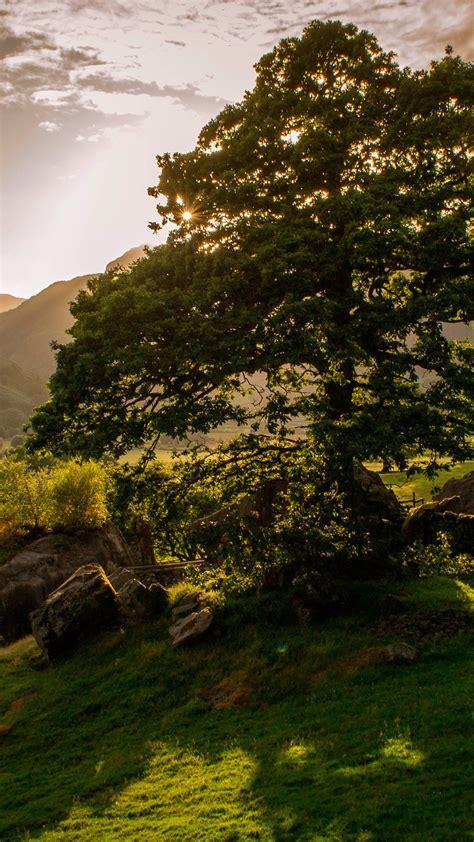 Wallpaper Ireland 5k 4k Wallpaper Trees Hills Meadows