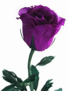 Violet Rose - DesiComments.com