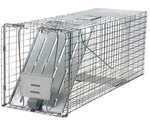 live trap cat humane live animal trap raccoon cats groundhogs opossum