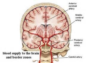 Diagnosing Hypoxic Ischemic Encephalopathy (HIE) Cerebral Hypoxia