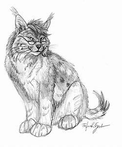 Bobcat Lynx Sketch By Foxfeather248 On Deviantart